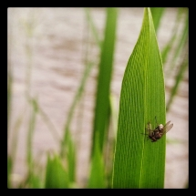 GinaMiranda-A Fly