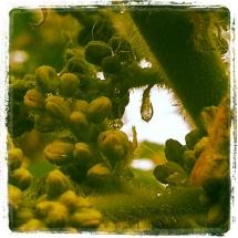 GinaMiranda-One peaceful raindrop