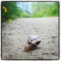 GinaMiranda-Slow and steady