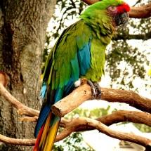 GinaMiranda-Parrot