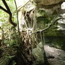 GinaMiranda-Ancient roots
