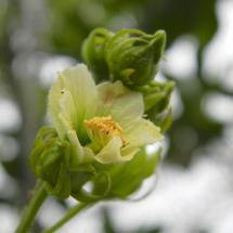 GinaMiranda-Blossom