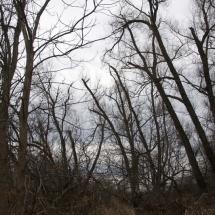 GinaMiranda-The woods