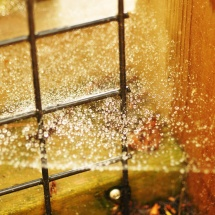 GinaMiranda-Spider webs in the rain