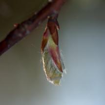 GinaMiranda-Spring