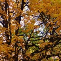 GinaMiranda-Fall
