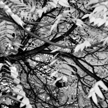 GinaMiranda-Nature's patterns