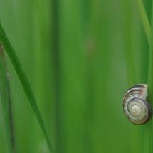 GinaMiranda-Snails