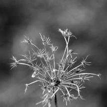 GinaMiranda-Flowers