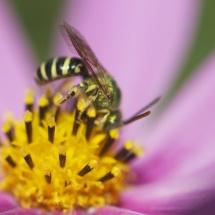 GinaMiranda-Worker Bee