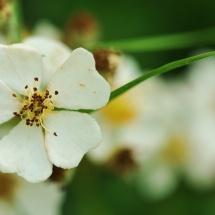 GinaMiranda-Wild Flowers