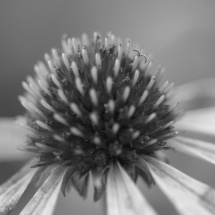 GinaMiranda-Flower