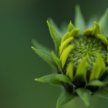 GinaMiranda-Blossoming