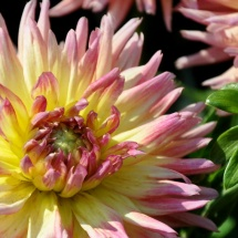 GinaMiranda-Flower power