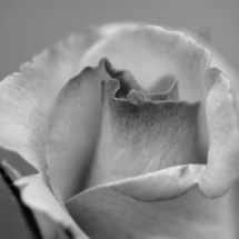 GinaMiranda-Rose