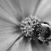 GinaMiranda-Bee