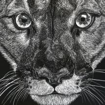 GinaMiranda-Cougar