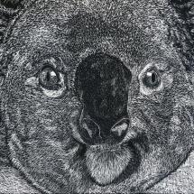 GinaMiranda-Koala