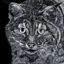 GinaMiranda-Lynx