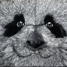 GinaMiranda-Panda