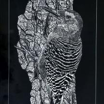 GinaMiranda-Woodpecker