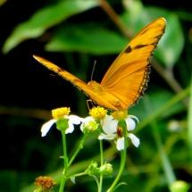GinaMiranda-Butterfly