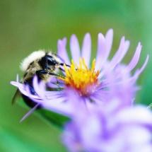 GinaMiranda-Just a Bee