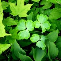 GinaMiranda-Greens