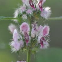 GinaMiranda-Weeds