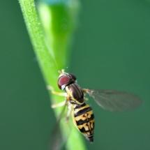 GinaMiranda-A Bee