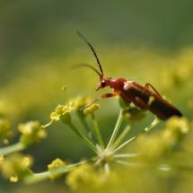 GinaMiranda-Bugs