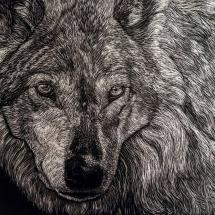 Grey wofl